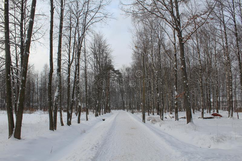 Winter in the city park. Trees without leaves, a lot of snow. Coldly. Animals want to eat. stock photo