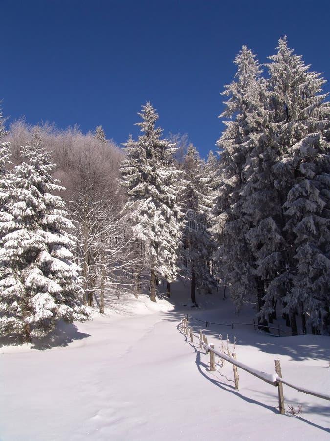 Winter in Ciucas Mountains stock photos