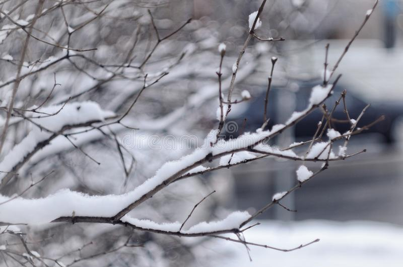 Twigs with snow in cloudy winter day royalty free stock photos