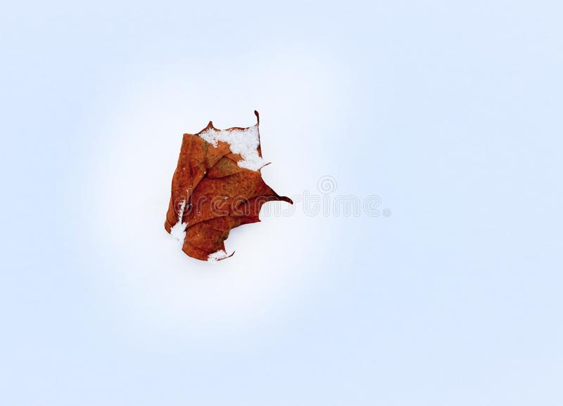 Winter, cold. Red maple leaf on snow in early winter royalty free stock images