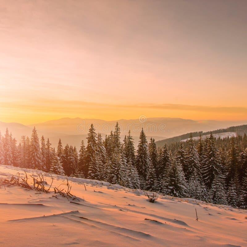 Winter Carpathian landscape stock image