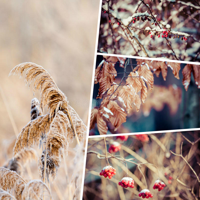 Winter collage my images royalty free stock photo