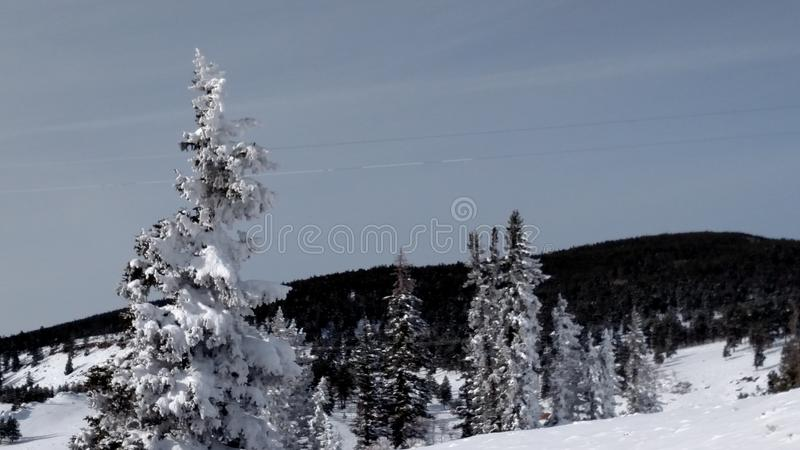 Winter Colorado royalty free stock photo