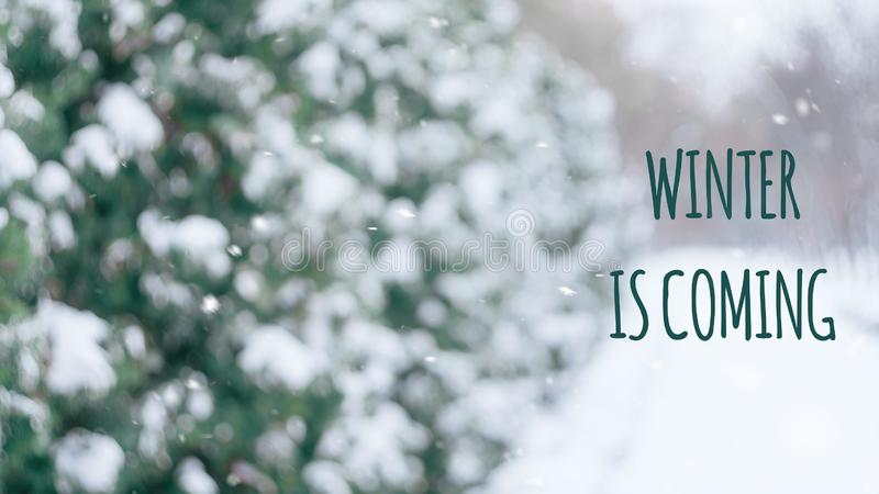Winter is coming text with winter scene snowy alley in the park. Christmas winter background royalty free stock photography