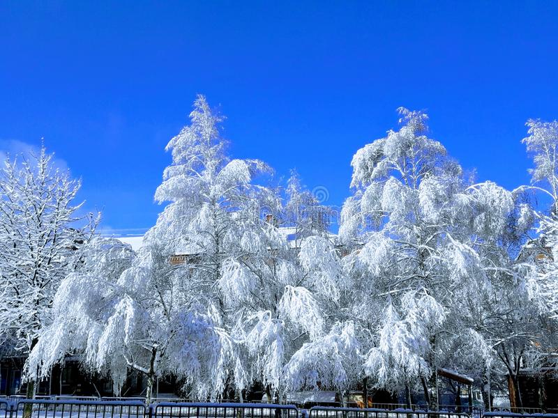 Winter composition stock photography