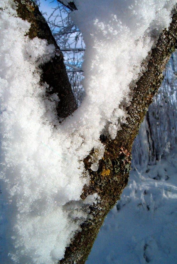 Winter compositon stock photos