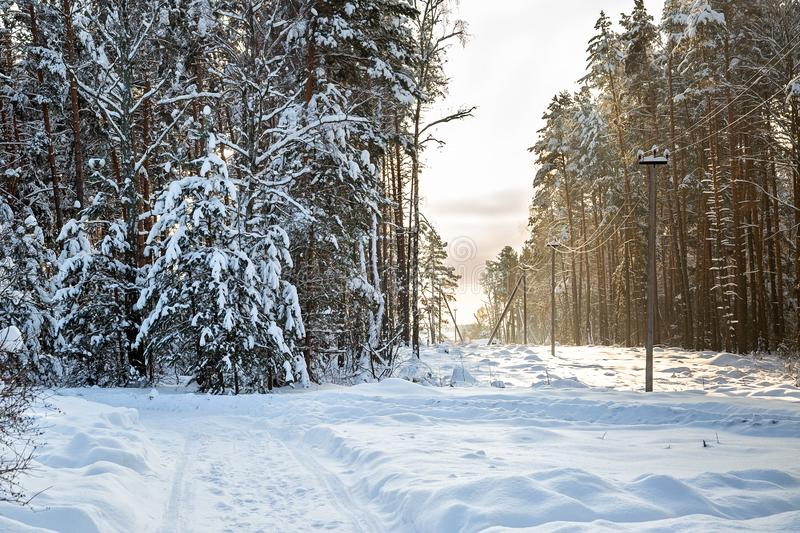 Winter country road to village. Deforestation, junction of power lines. glade for power line. Winter forest after snowfall. Snow. Winter country road royalty free stock photos