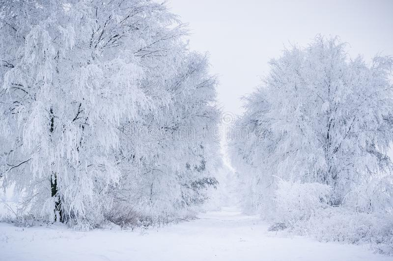 Winter country road with frost covrered trees stock images