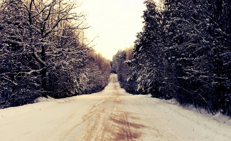 Winter country road in a wood stock photo