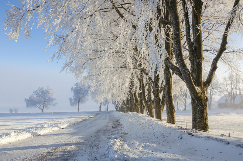 Winter countryroad royalty free stock image