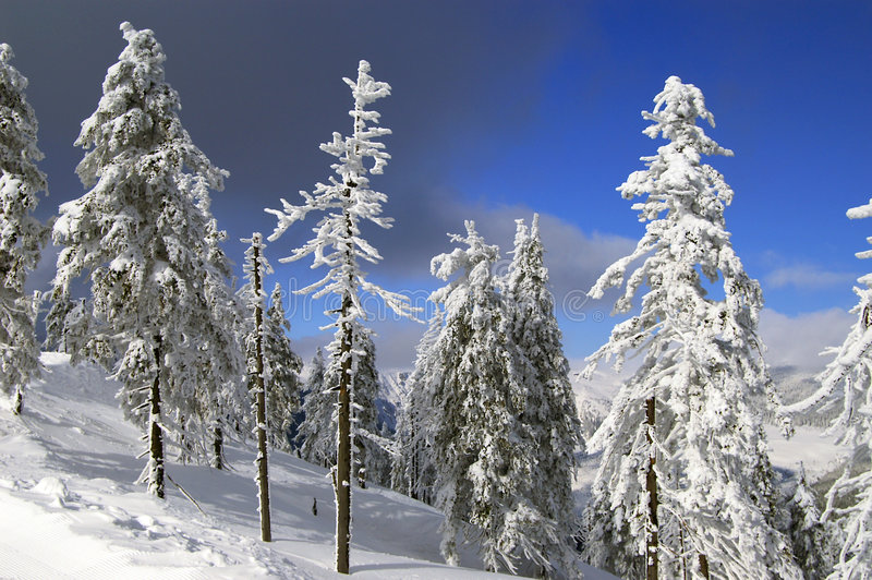 Winter in Czech royalty free stock photos