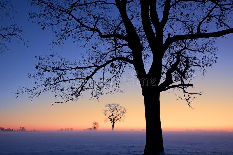 Winter-Dämmerung lizenzfreie stockfotos