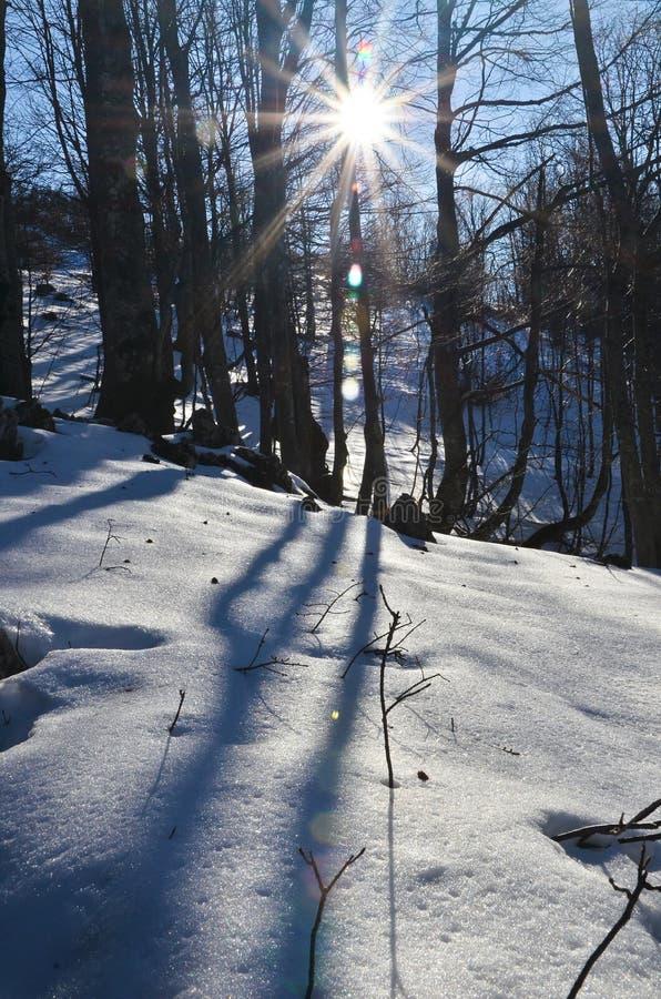Free Winter Day Royalty Free Stock Photos - 22942418