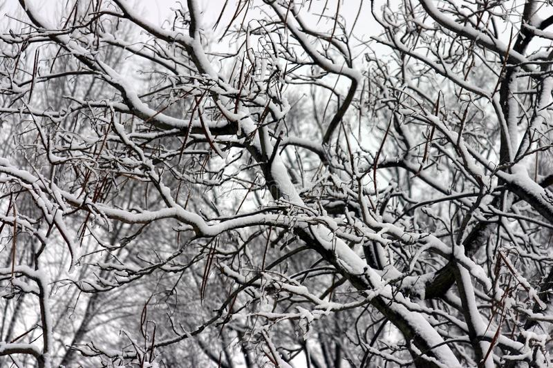 Winter Day royalty free stock photography