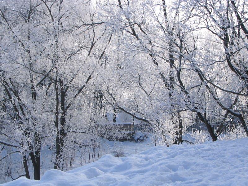 Winter day stock photos