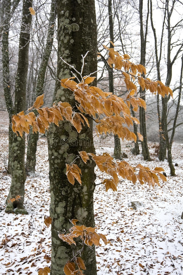 Free Winter Day In Autumn Forest Stock Images - 12656454