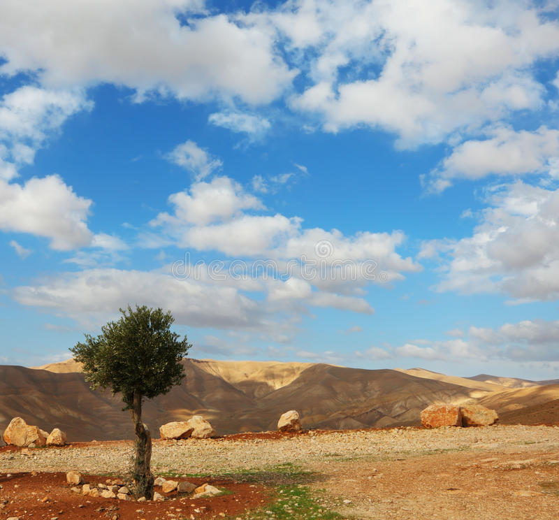 Winter Day In The Judean Desert Royalty Free Stock Photos