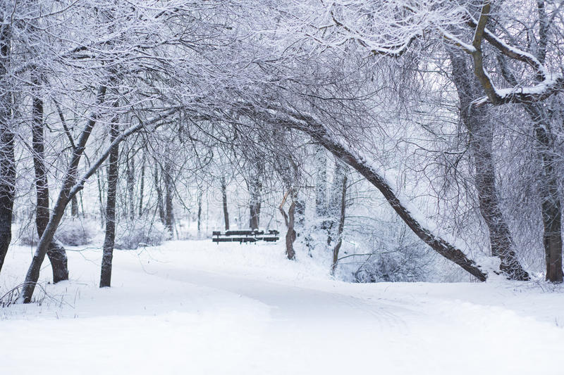 Winter day in a park royalty free stock images