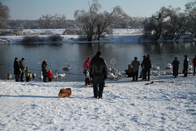 Winter day at a river royalty free stock photos
