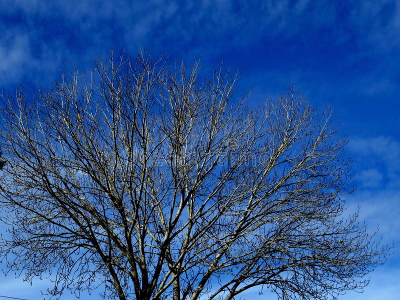Winter days with a dry tree. Leaves fall off the tree during cold winter days making it look all thorny royalty free stock photography