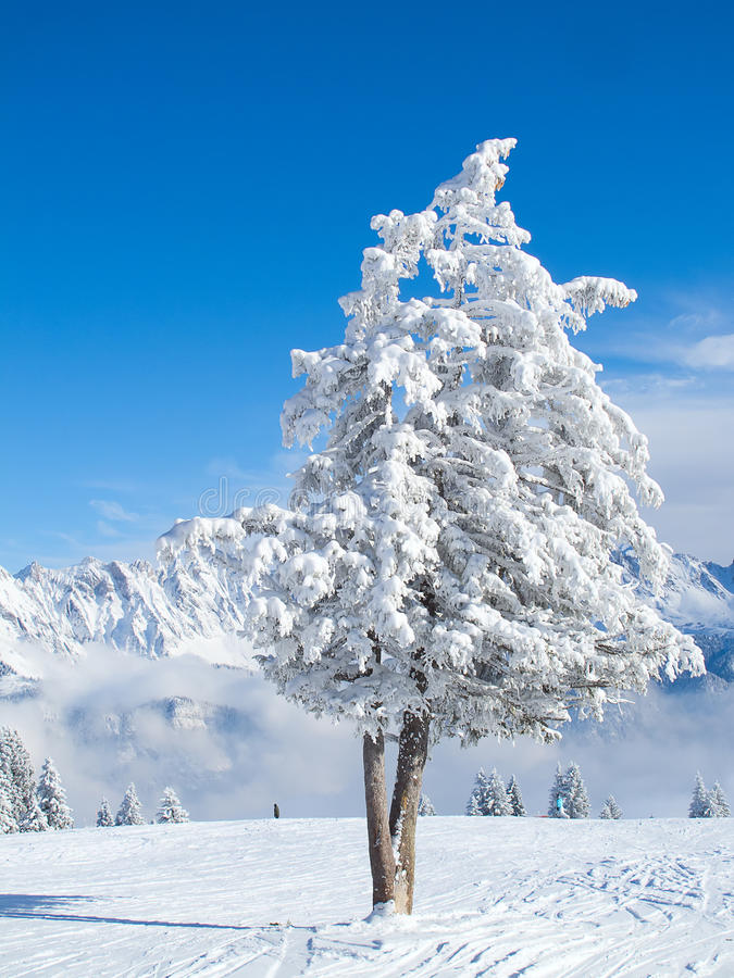 Winter in den Alpen lizenzfreies stockfoto