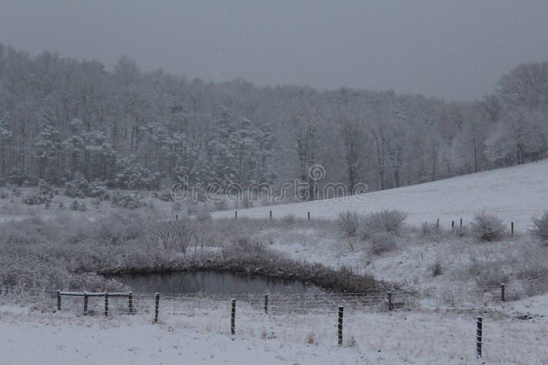 Winter in der hinteren Weide stockbilder