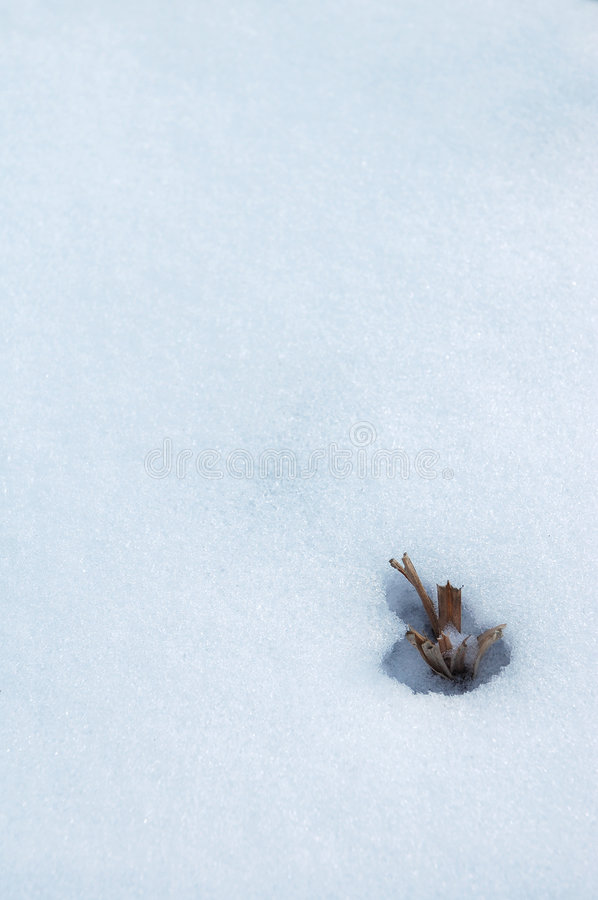 Download Winter detail stock image. Image of nature, plant, vertical - 474085