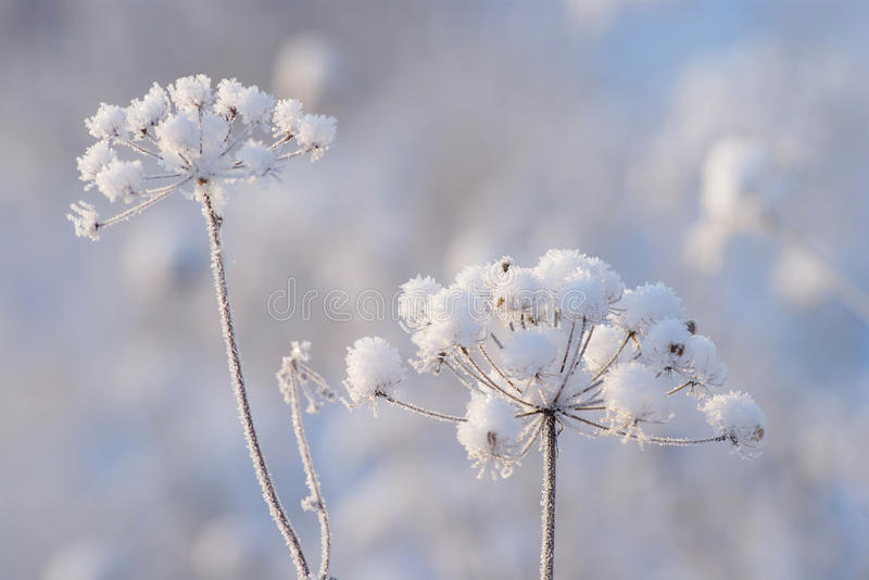 Winter Detail royalty free stock photos