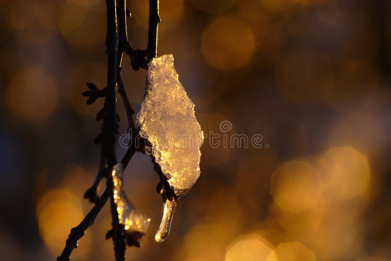 Ice On Branch royalty free stock image