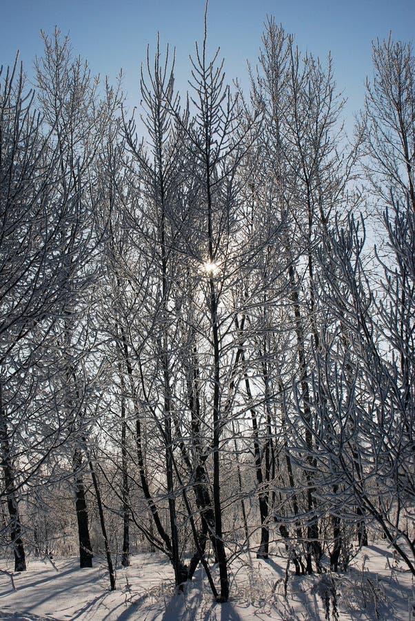 Winter die sunlights door sneeuw behandelde bomen de stromen stock afbeeldingen