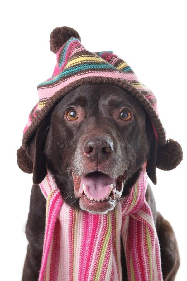 Winter dog stock image