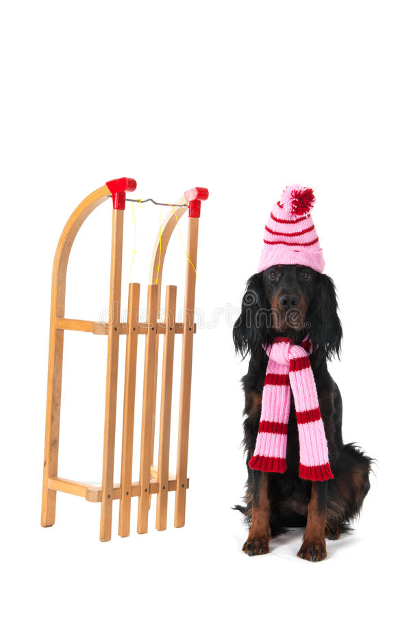 Download Winter Dog Stock Images - Image: 27647704