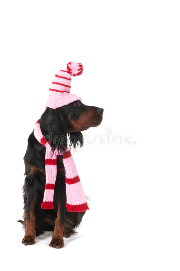 Download Winter Dog Royalty Free Stock Photo - Image: 27647735