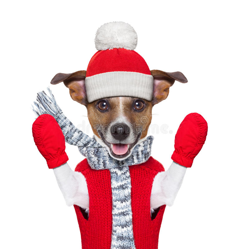 Download Winter dog stock photo. Image of fall, holiday, scarf - 34346734