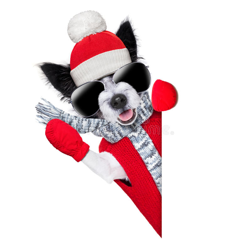Download Winter dog stock photo. Image of russell, funny, celebration - 34346820