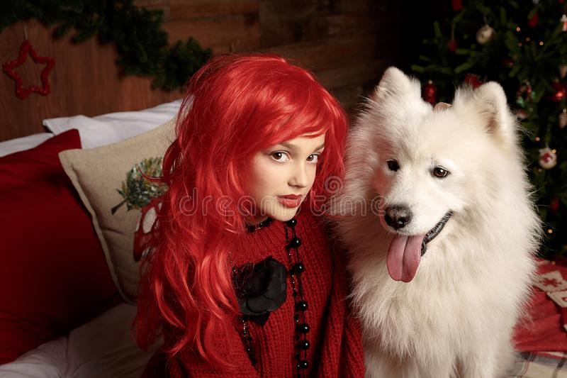 Winter dog holiday and Christmas. A girl in a knitted sweater and with red hair with a pet in the studio. Christmas stock image