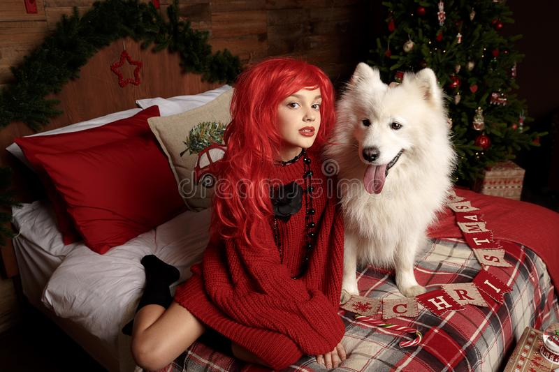 Winter dog holiday and Christmas. A girl in a knitted sweater and with red hair with a pet in the studio. Christmas royalty free stock photography