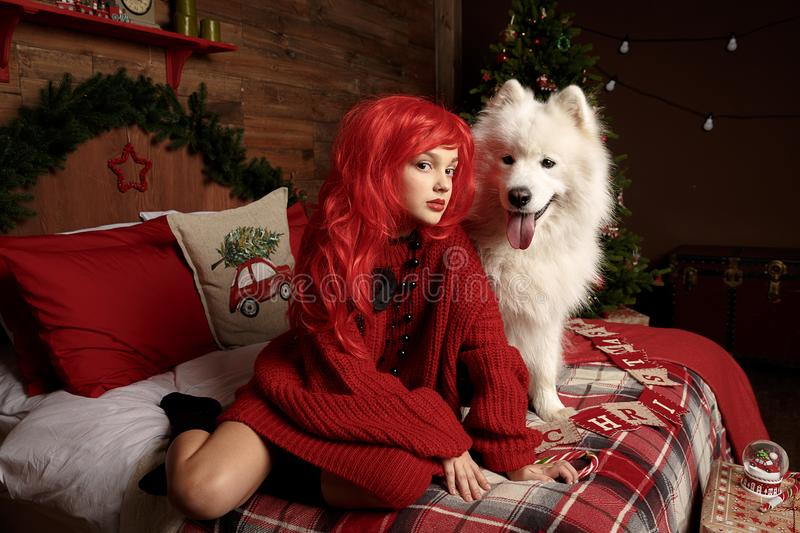 Winter dog holiday and Christmas. A girl in a knitted sweater and with red hair with a pet in the studio. Christmas stock images