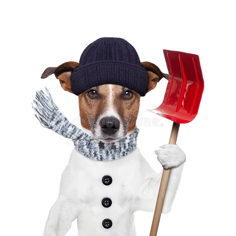 Winter dog shovel snow royalty free stock image