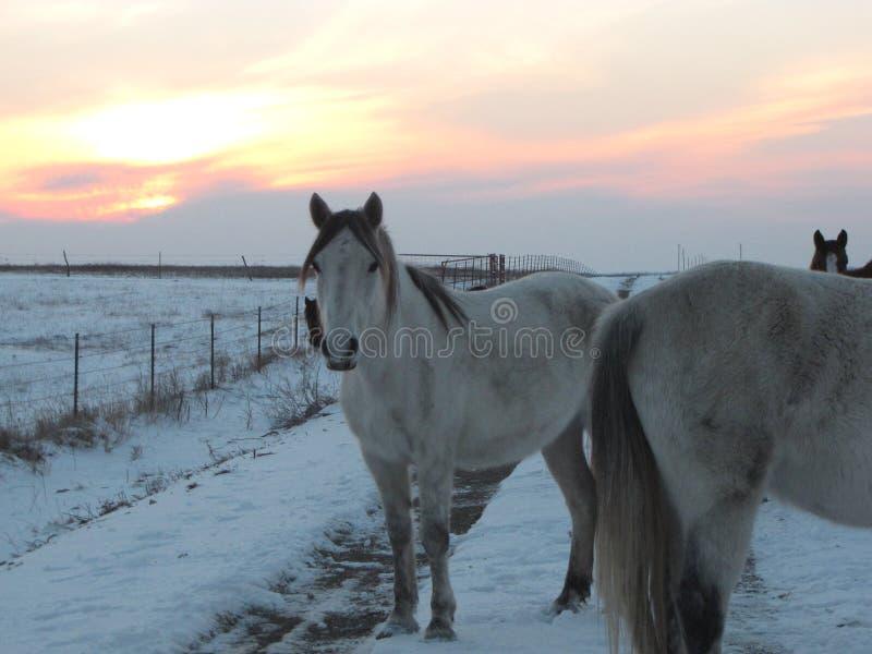 Winter drive through the wild mustangs. In the Flinthills of Kansas stock photos