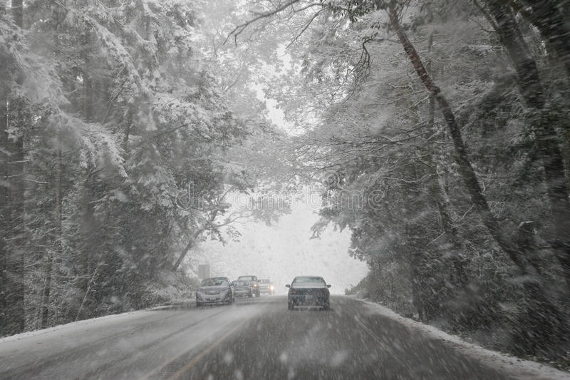 Winter Driving Canopy of Trees royalty free stock photos