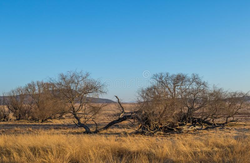 Winter early morning landscape kwaZulu-Natal South Africa. Winter farm landscape in the kwaZulu-Natal Midlands region of South Africa image with copy space royalty free stock image