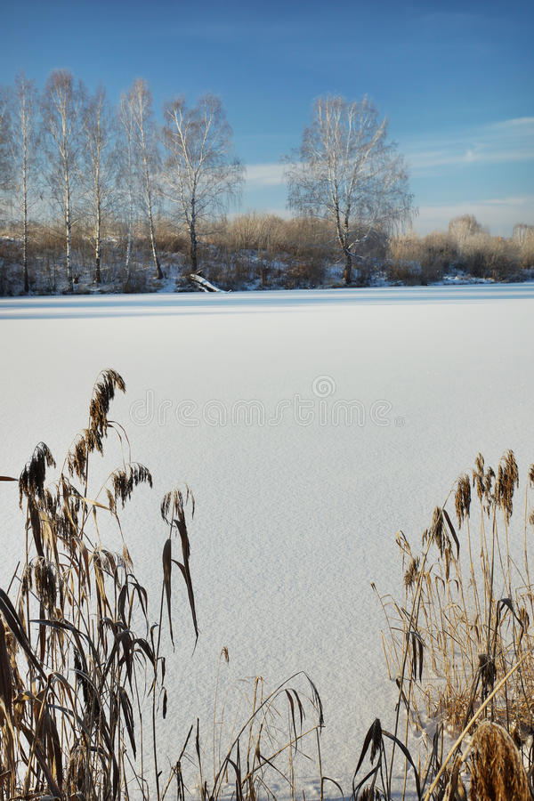 Winter in einem gefrorenen teich lizenzfreie for Teich winter