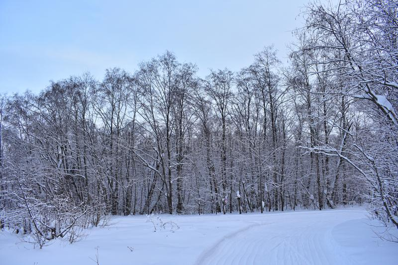 Winter enchantress bewitched nature snow fairy tale royalty free stock photos