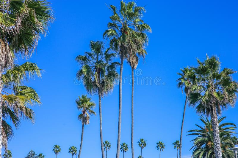 Vacation image of tropical palm trees in blue sky royalty free stock image