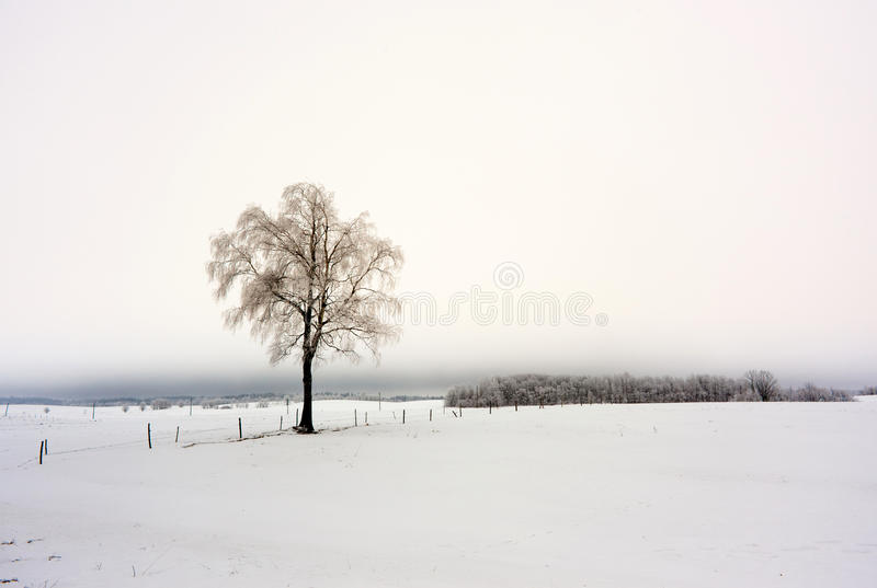Download Winter in Europe stock photo. Image of arctic, tree, fence - 27336968