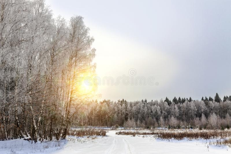 Winter evening on the edge of the forest stock photography