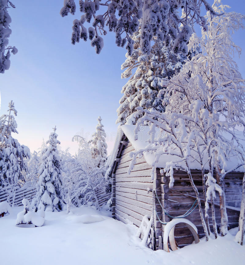 Winter fairy forest stock photo