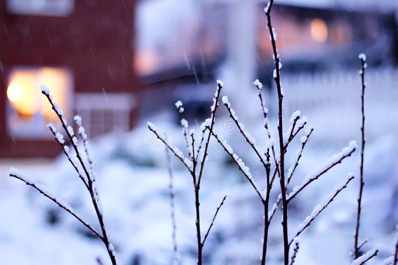 Winter fairytale evening snowfall landscape. First snow stock photos