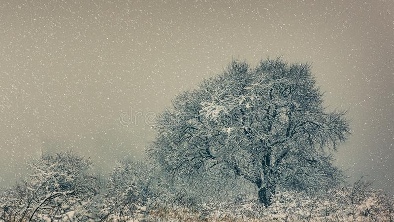 Winter fairytale scene royalty free stock photo
